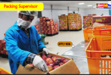 Photo of Required Packing Supervisor – Job In Surat